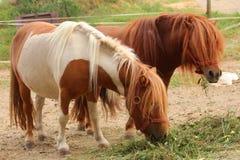 Χαριτωμένα άλογα πόνι Στοκ Εικόνες