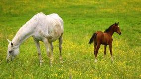 Χαριτωμένα άλογα στο λιβάδι φιλμ μικρού μήκους
