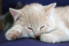 Χαριτωμένα γάτα/γατάκι Στοκ εικόνα με δικαίωμα ελεύθερης χρήσης