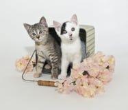 χαριτωμένα γατάκια δύο στοκ εικόνα με δικαίωμα ελεύθερης χρήσης