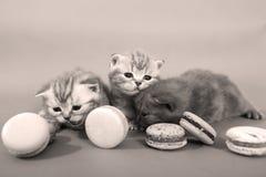 Χαριτωμένα γατάκια με τα macarons Στοκ φωτογραφία με δικαίωμα ελεύθερης χρήσης