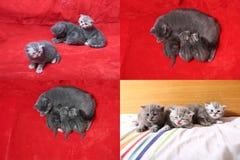 Χαριτωμένα γατάκια μωρών που παίζουν στην κρεβατοκάμαρα, κρεβάτι, multicam οθόνες πλέγματος 2x2 Στοκ Φωτογραφίες
