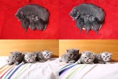 Χαριτωμένα γατάκια μωρών που παίζουν στην κρεβατοκάμαρα, κρεβάτι, multicam οθόνες πλέγματος 2x2 Στοκ Εικόνες