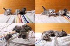 Χαριτωμένα γατάκια μωρών που παίζουν στην κρεβατοκάμαρα, κρεβάτι, multicam οθόνες πλέγματος 2x2 Στοκ Εικόνα