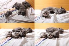 Χαριτωμένα γατάκια μωρών που παίζουν στην κρεβατοκάμαρα, κρεβάτι, multicam οθόνες πλέγματος 2x2 Στοκ Φωτογραφία