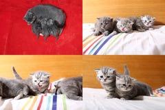 Χαριτωμένα γατάκια μωρών που παίζουν στην κρεβατοκάμαρα, κρεβάτι, multicam οθόνες πλέγματος 2x2 Στοκ φωτογραφία με δικαίωμα ελεύθερης χρήσης