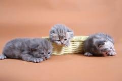 Χαριτωμένα γατάκια μωρών Στοκ φωτογραφίες με δικαίωμα ελεύθερης χρήσης