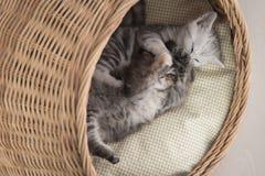 Χαριτωμένα γατάκια που παίζουν στο ψάθινο κρεβάτι Στοκ εικόνες με δικαίωμα ελεύθερης χρήσης