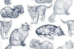 χαριτωμένα γατάκια πρότυπο άνευ ραφής Στοκ φωτογραφία με δικαίωμα ελεύθερης χρήσης