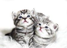 Χαριτωμένα γατάκια σε ένα άσπρο υπόβαθρο Στοκ Εικόνες