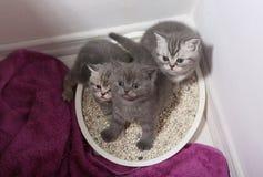 Χαριτωμένα γατάκια στα απορρίματα στοκ φωτογραφία με δικαίωμα ελεύθερης χρήσης