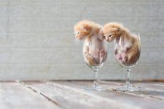 Χαριτωμένα γατάκια στο γυαλί κρασιού με το κατασκευασμένο υπόβαθρο Στοκ Εικόνες