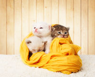 Χαριτωμένα γατάκια στο κίτρινο βαμβάκι στο ξύλινο υπόβαθρο Στοκ φωτογραφίες με δικαίωμα ελεύθερης χρήσης