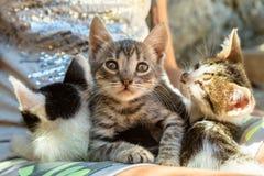 χαριτωμένα γατάκια τρία Στοκ Εικόνες