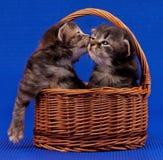Χαριτωμένα γατάκια Στοκ Εικόνες