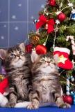 χαριτωμένα γατάκια Στοκ Φωτογραφία