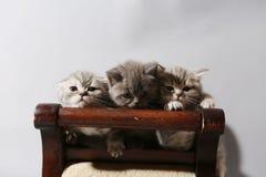 χαριτωμένα γατάκια Στοκ φωτογραφίες με δικαίωμα ελεύθερης χρήσης