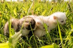 χαριτωμένα γατάκια Στοκ Εικόνα