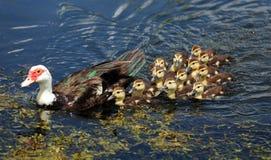 Χαριτωμένα ζώα μωρών Στοκ φωτογραφίες με δικαίωμα ελεύθερης χρήσης
