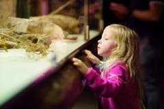 Χαριτωμένα ζώα προσοχής μικρών κοριτσιών στο ζωολογικό κήπο Ζώα ζωολογικών κήπων προσοχής παιδιών μέσω του παραθύρου Στοκ Εικόνες