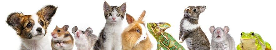 Χαριτωμένα ζώα Στοκ φωτογραφίες με δικαίωμα ελεύθερης χρήσης