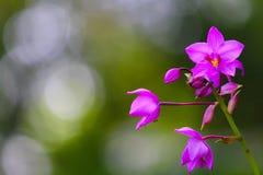 Χαριτωμένα ιώδη λουλούδια ορχιδεών στο θολωμένο υπόβαθρο στοκ εικόνες με δικαίωμα ελεύθερης χρήσης