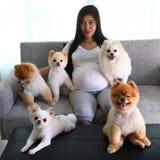 Χαριτωμένα κατοικίδια ζώα σκυλιών γυναικών έγκυα και pomeranian στο καθιστικό Στοκ φωτογραφία με δικαίωμα ελεύθερης χρήσης