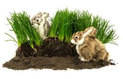 Χαριτωμένα κουνέλια, κατοικίδια ζώα στο χώμα με τη χλόη Στοκ Εικόνες