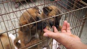 Χαριτωμένα κουτάβια στο κλουβί απόθεμα βίντεο