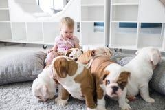 Χαριτωμένα κουτάβια της αγγλικής συνεδρίασης μπουλντόγκ στον τάπητα με το μικρό κορίτσι Στοκ Εικόνες