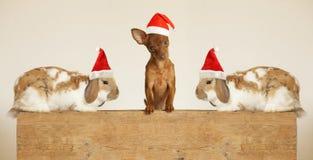 Χαριτωμένα κουτάβι και κουνέλια φίλων στο καπέλο Santa στοκ εικόνες