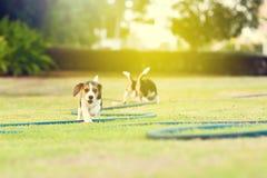 Χαριτωμένα λαγωνικά στον κήπο Στοκ φωτογραφία με δικαίωμα ελεύθερης χρήσης