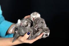 Χαριτωμένα μικρά γατάκια μωρών Στοκ Φωτογραφίες