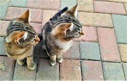 Χαριτωμένα μικρά γατάκια που κοιτάζουν σε μια κατεύθυνση στοκ φωτογραφία με δικαίωμα ελεύθερης χρήσης