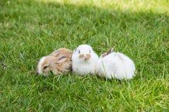 Χαριτωμένα μικρά κουνέλια στη χλόη στοκ εικόνα με δικαίωμα ελεύθερης χρήσης