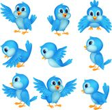Χαριτωμένα μπλε κινούμενα σχέδια πουλιών