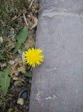 χαριτωμένα λουλούδια Στοκ Εικόνα