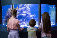 Χαριτωμένα παιδιά που εξετάζουν τη δεξαμενή ψαριών Στοκ Εικόνα
