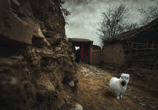 Χαριτωμένα πρόβατα στο δρόμο Στοκ Φωτογραφία