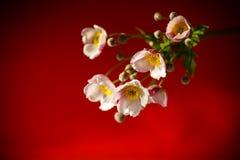 Χαριτωμένα ρόδινα λουλούδια σε ένα κόκκινο υπόβαθρο Στοκ Εικόνα