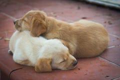 Χαριτωμένα σκυλιά στοκ φωτογραφίες