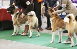 Χαριτωμένα σκυλιά με τους ιδιοκτήτες στοκ εικόνα