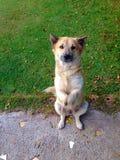 χαριτωμένα σκυλιά Στοκ φωτογραφία με δικαίωμα ελεύθερης χρήσης