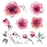 Χαριτωμένα στοιχεία λουλουδιών watercolor χρωματισμένα χέρι για την πρόσκληση, γαμήλια κάρτα Στοκ Εικόνες