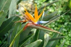 Χαριτωμένα τροπικά λουλούδια Βασιλικός βλαστός στοκ εικόνες