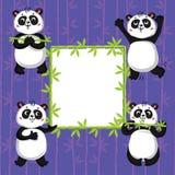 Χαριτωμένα pandas και μπαμπού Στοκ Φωτογραφίες