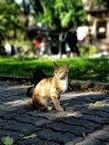 Χαριτωμένες άστεγες γάτες στο πεζοδρόμιο σε μια πόλη με το θολωμένο υπόβαθρο στοκ εικόνες με δικαίωμα ελεύθερης χρήσης