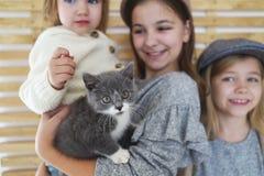 Χαριτωμένες αδελφές μικρών κοριτσιών μόδας με ένα βρετανικό γατάκι στα όπλα στοκ εικόνες