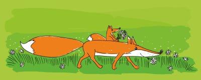χαριτωμένες αλεπούδες Στοκ Εικόνα