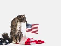 Χαριτωμένες γατάκι και αμερικανική σημαία Βλαστός φωτογραφιών στούντιο στοκ εικόνες με δικαίωμα ελεύθερης χρήσης